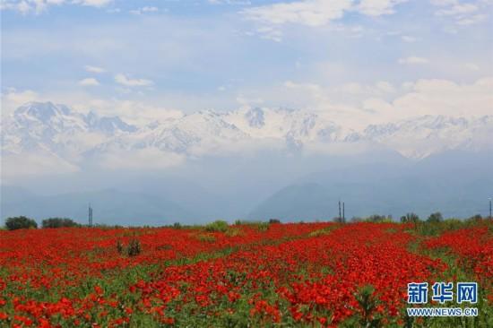 哈萨克斯坦风光图片