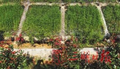 绿道三期分为慢行(主线 连接线),绿廊(景观绿化),服务设施(1个亭廊 3
