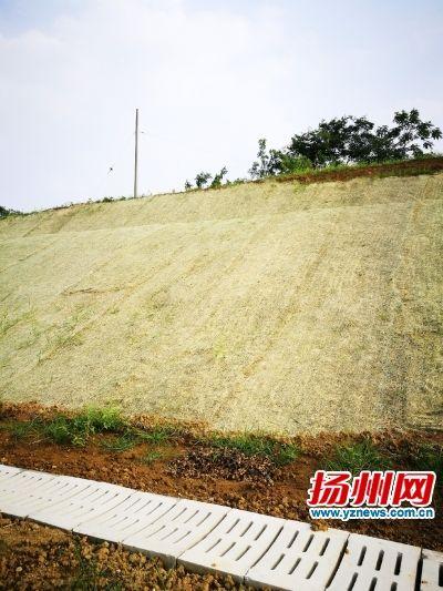"""宿扬高速护坡披上""""黄衣裳""""秸秆变身环保植被毯"""