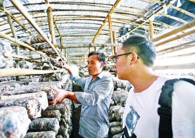 淅川梅池村农民脱贫故事:一袋袋香菇棒让土屋变新房