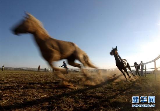旅游季 驯马忙