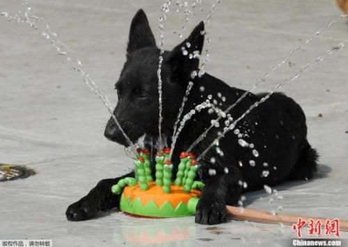 纽约一只狗狗玩水冲凉