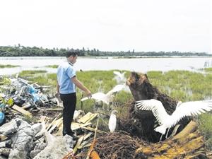 东寨港红树林放归46只国家二级保护动物白鹭