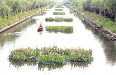 南通海安开发区在河道种植花卉 形成景观