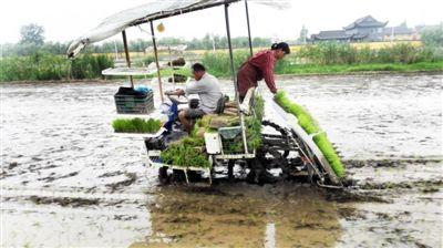 南通海门全市5万亩水稻种植基本完成