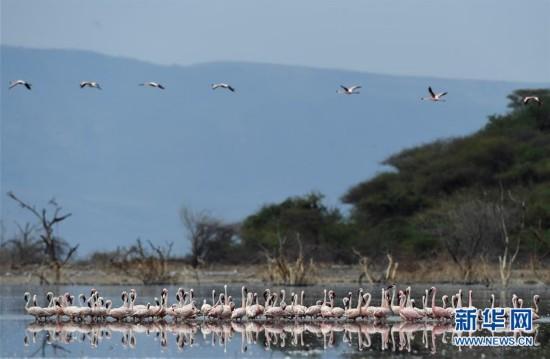 博戈里亚湖位於肯尼亚东非大裂谷地区中部,距首都内罗毕约300公图片