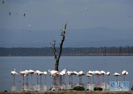 走进肯尼亚纳库鲁湖国家公园