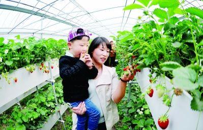 """淮安金湖""""品牌兴农""""实现农业快速转型"""