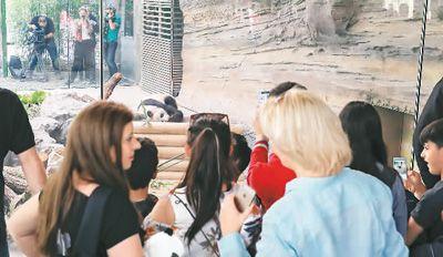 7月5日,柏林动物园大熊猫馆举行开馆仪式,两只大熊猫正式亮相.