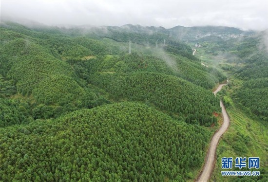 山定权、树定根、人定心――福建林改奏响绿色发展咏叹调