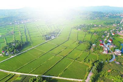 水稻种内部结构图
