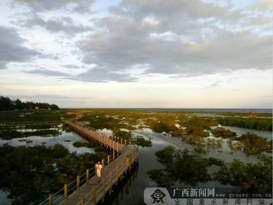 金海湾红树林促良好生态 构筑生物乐园