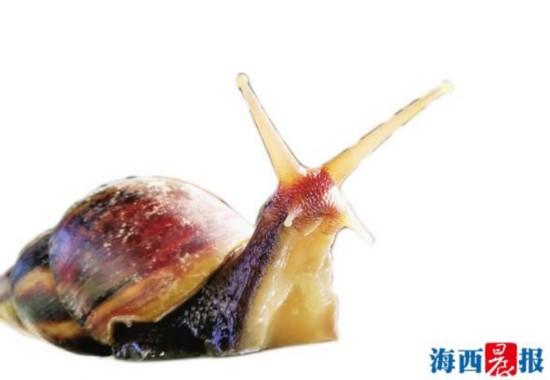 """个头虽小故事却很大 厦门蜗牛哥讲述蜗牛""""传奇"""""""