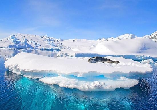 南极海豹。HHtravel鸿鹄逸游供图