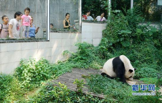 """福州:""""水果冰""""助大熊猫避暑降温"""