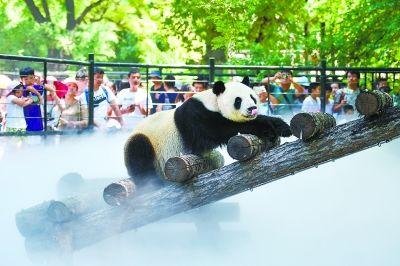 北京动物园:动物们日享700公斤水果解暑