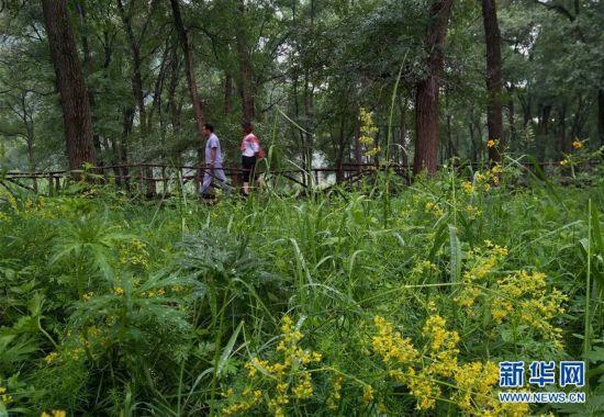 河北赤城:筑牢京津生态屏障