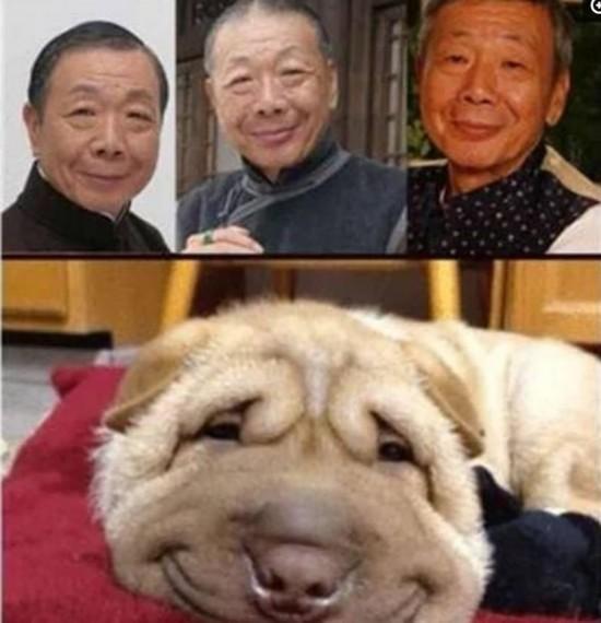 盘点与动物撞脸的明星们   撞脸已故的香港老戏骨午马老师,有午马老师
