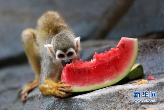 福建泉州:萌猴消暑