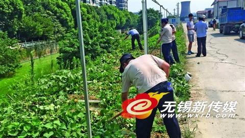 """500平米公共绿地变""""菜园"""" 无锡城管强制清理"""