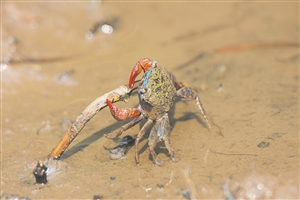 海口三江湿地:自然,赋予动植物的传奇