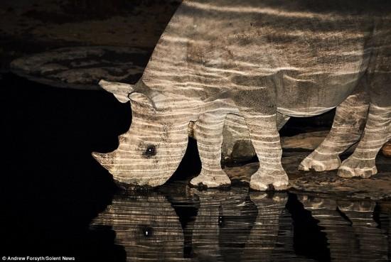 摄影师拍摄黑犀牛夜间溪边饮水的宁静画面