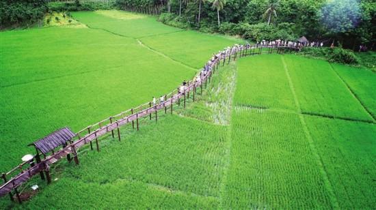 海南省人大常委会:为绿水青山筑起法制屏障