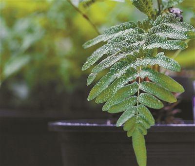 深圳野生植物丰富多样