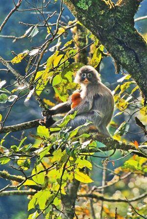 高黎贡山生物走廊带:野生动物的生命通道