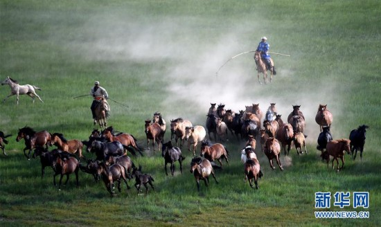 蒙古马逐渐回归中国蒙古族牧民生活