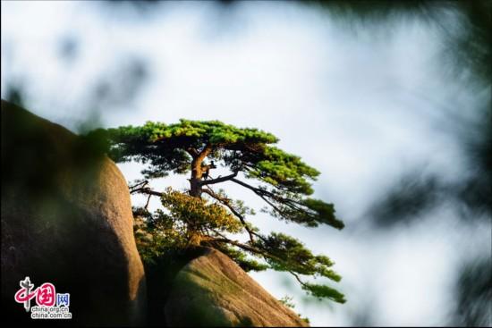 黄山:树影摇曳生姿 泉水清澈流淌(图)