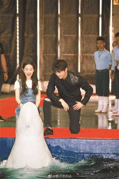 刘亦菲杨洋与白鲸互动