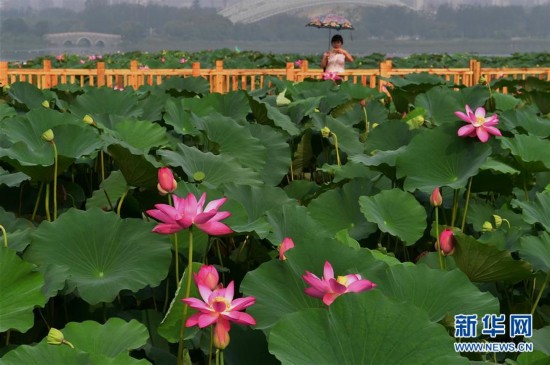 河北唐山:采煤沉降地变身风景区