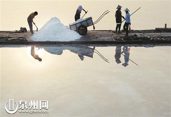 百年盐场伏收季