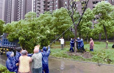 雷暴来袭树被吹倒 南通海门园林部门出动抢险