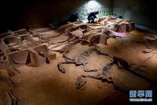 洛阳周王城天子驾六博物馆车马坑进行保护加固