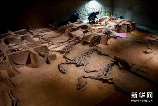 (文化)(1)洛阳周王城天子驾六博物馆车马坑进行保护加固