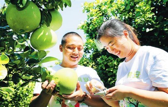 8月9日,澄迈洪安农业开发有限公司总经理安烁宇和妻子黄晓玲在果园测试即将上市的蜜柚甜度。 记者 苏晓杰 通讯员 宋祥达 摄