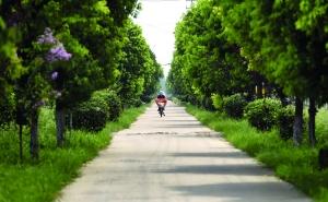 """高效农业带来""""奇迹"""" 扬州200多万亩农田变花园"""