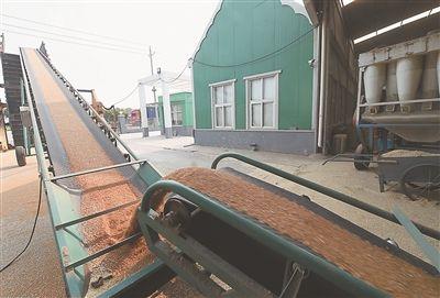 泰州姜堰:六百多吨烘干小麦送往国库