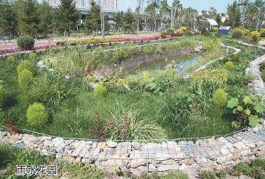 """雨水花园:藏个吃水""""大胃王""""-探秘 海绵城市 试点 群力这处生态园藏图片"""