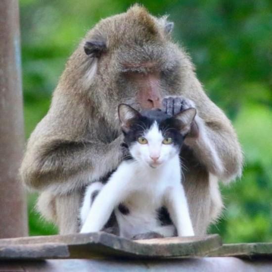 泰猕猴和小猫成好友形影不离 画面甜蜜有爱(组图)