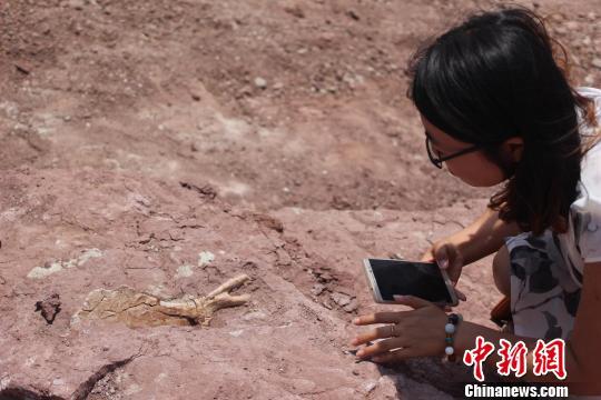 莱阳白垩纪地质遗址新发现类型丰富的恐龙化石(图)
