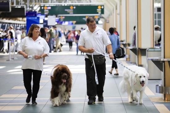 """机场工作人员会确保""""治疗犬""""在帮旅客解压的过程中自己不会压力太大。"""