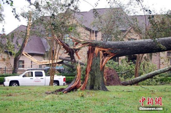 """大西洋飓风""""哈维""""于8月25日夜间登陆得州南部沿海地区后,26日上午,风速已降至1级。图为得州福遍县(Fort Bend County)密苏里市(Missouri City)的Sienna Plantation小区,一户居民房屋前的大树被刮断。<a target='_blank'  data-cke-saved-href='http://www.chinanews.com/' href='http://www.chinanews.com/'><p  align="""
