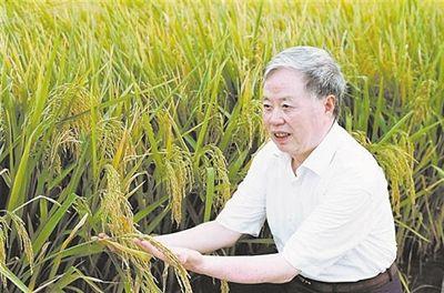 """让苍生不再挨饿 """"水稻院士""""用一生履行承诺"""
