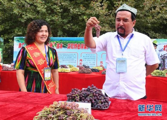 (经济)(3)吐鲁番葡萄节216种葡萄斗艳