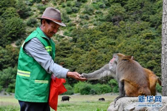 西藏工布江达县的藏猕猴乐园