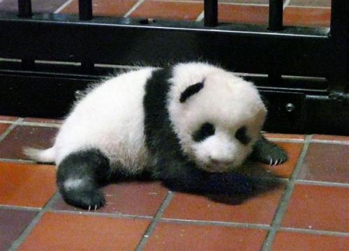 来源:东京动物园协会。