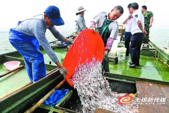 太湖9月1日起全面开捕 银鱼减产约20%